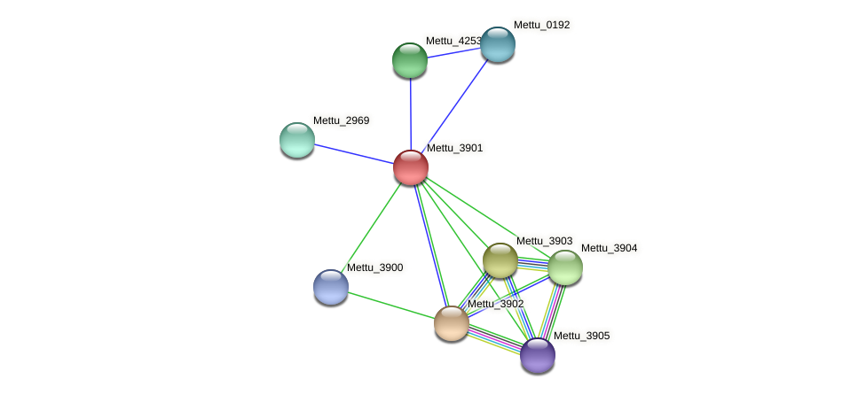 Mettu_3901 protein (Methylobacter tundripaludum) - STRING interaction network