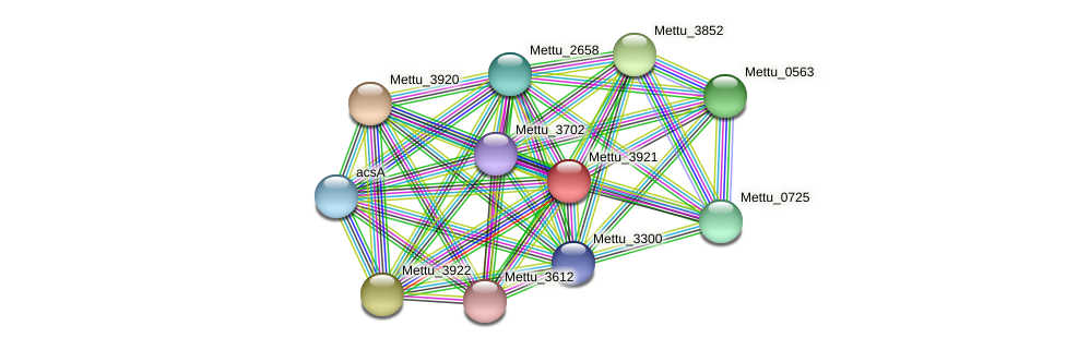 Mettu_3921 protein (Methylobacter tundripaludum) - STRING interaction network