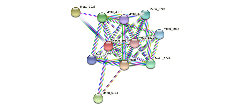 Mettu_3937 protein (Methylobacter tundripaludum) - STRING interaction network