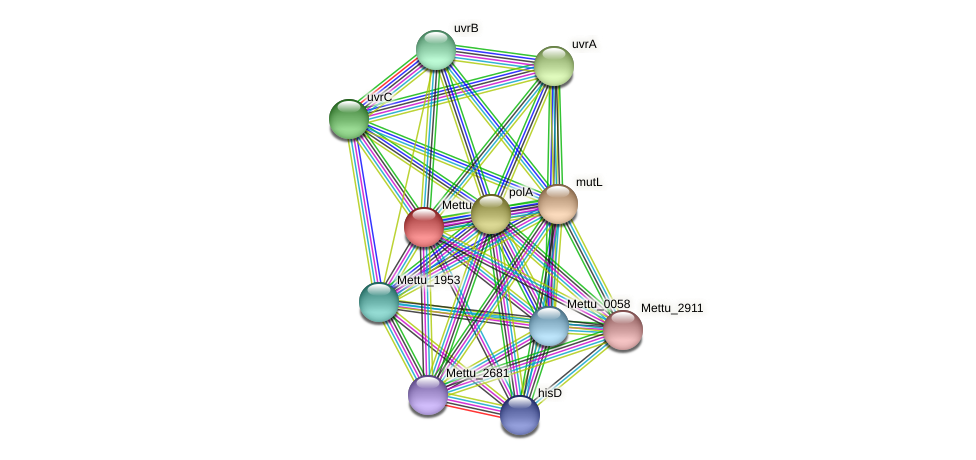 Mettu_3955 protein (Methylobacter tundripaludum) - STRING interaction network