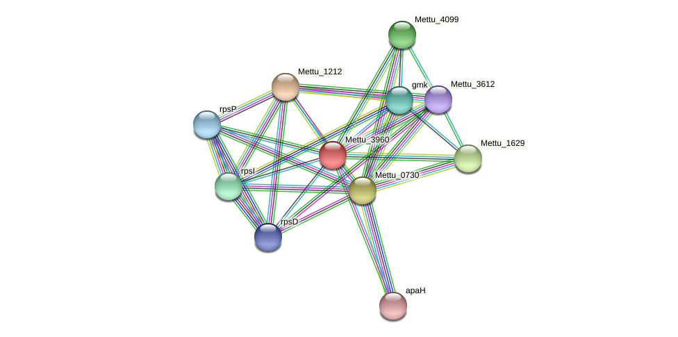 Mettu_3960 protein (Methylobacter tundripaludum) - STRING interaction network