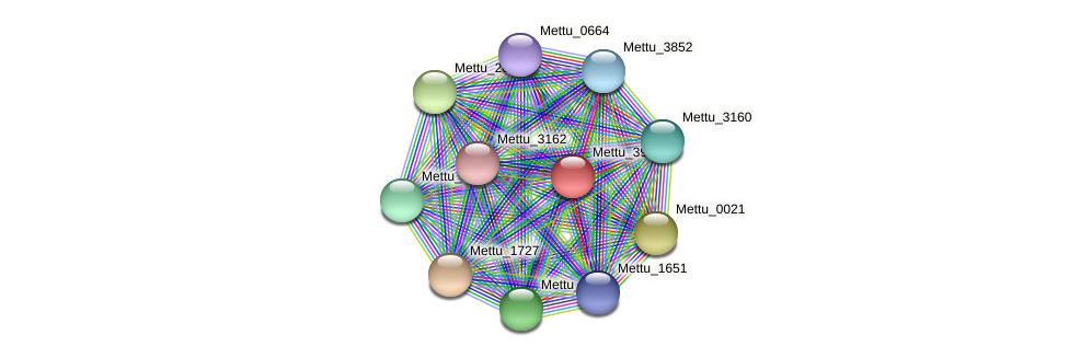 Mettu_3972 protein (Methylobacter tundripaludum) - STRING interaction network