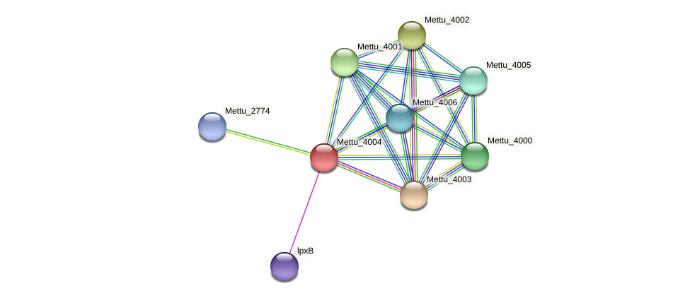Mettu_4004 protein (Methylobacter tundripaludum) - STRING interaction network