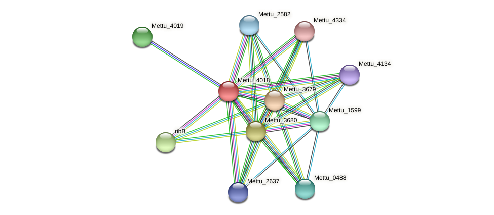 Mettu_4018 protein (Methylobacter tundripaludum) - STRING interaction network