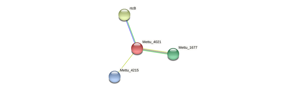 Mettu_4021 protein (Methylobacter tundripaludum) - STRING interaction network