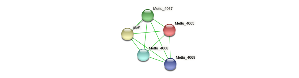 Mettu_4065 protein (Methylobacter tundripaludum) - STRING interaction network