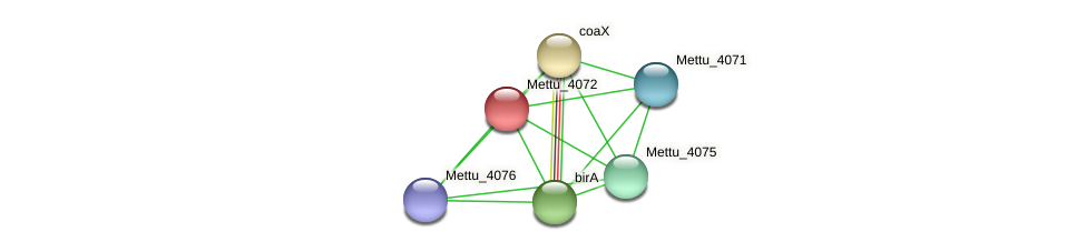 Mettu_4072 protein (Methylobacter tundripaludum) - STRING interaction network