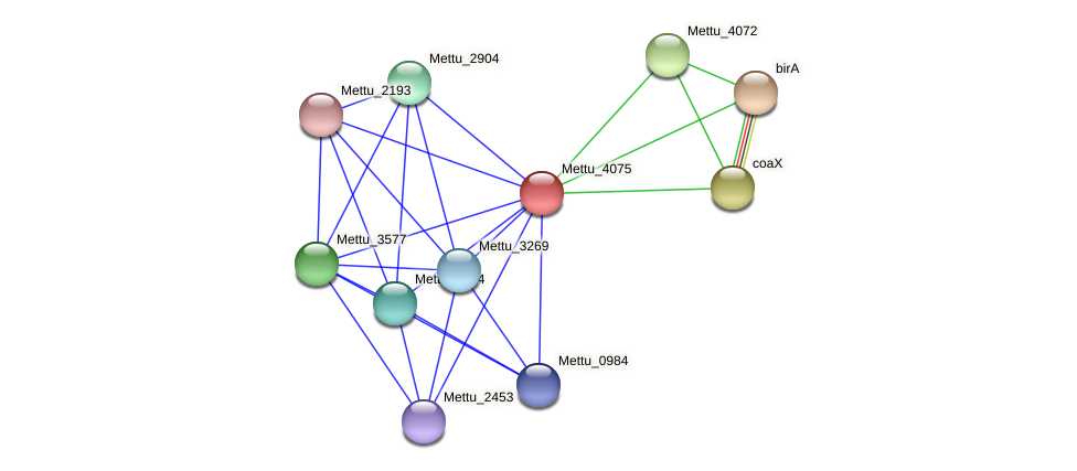 Mettu_4075 protein (Methylobacter tundripaludum) - STRING interaction network