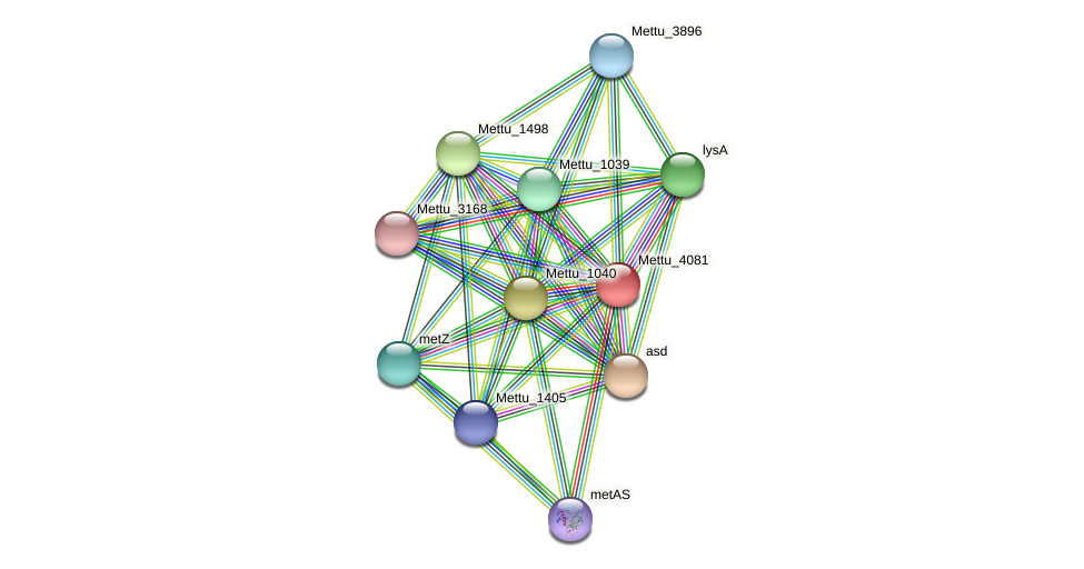 Mettu_4081 protein (Methylobacter tundripaludum) - STRING interaction network