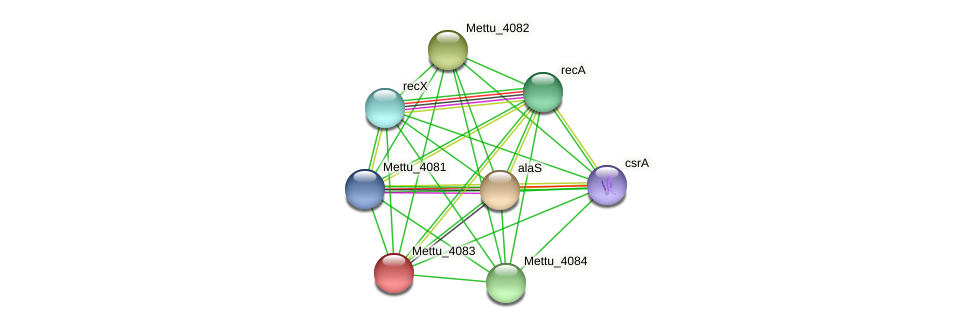 Mettu_4083 protein (Methylobacter tundripaludum) - STRING interaction network