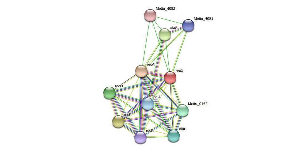 recX protein (Methylobacter tundripaludum) - STRING interaction network