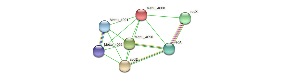 Mettu_4088 protein (Methylobacter tundripaludum) - STRING interaction network