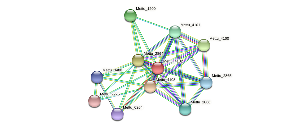 Mettu_4102 protein (Methylobacter tundripaludum) - STRING interaction network