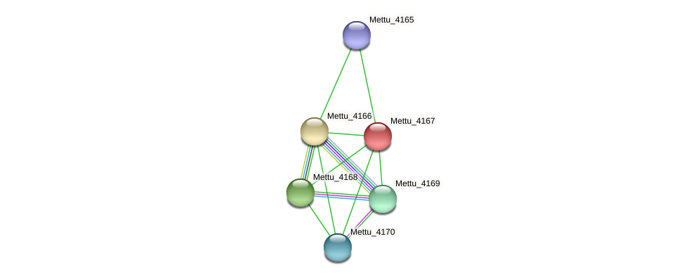 Mettu_4167 protein (Methylobacter tundripaludum) - STRING interaction network