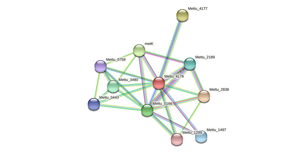 Mettu_4176 protein (Methylobacter tundripaludum) - STRING interaction network
