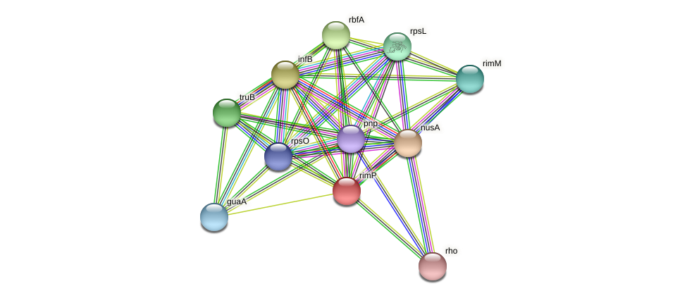 rimP protein (Methylobacter tundripaludum) - STRING interaction network