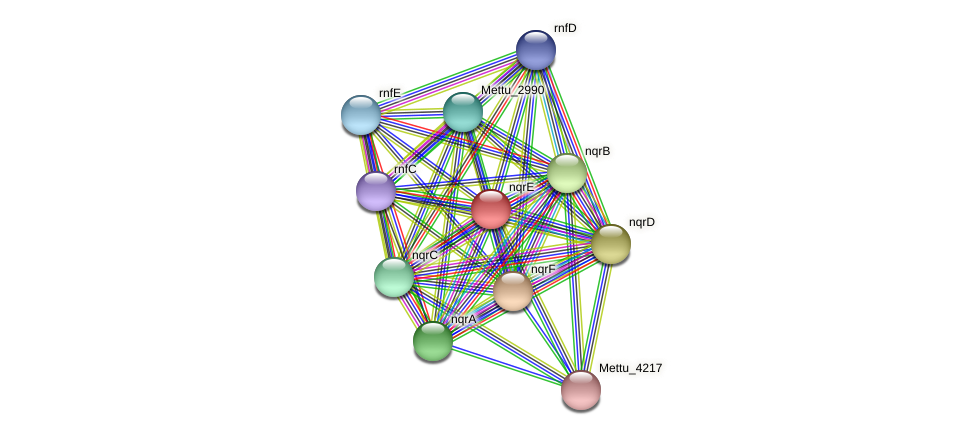 nqrE protein (Methylobacter tundripaludum) - STRING interaction network