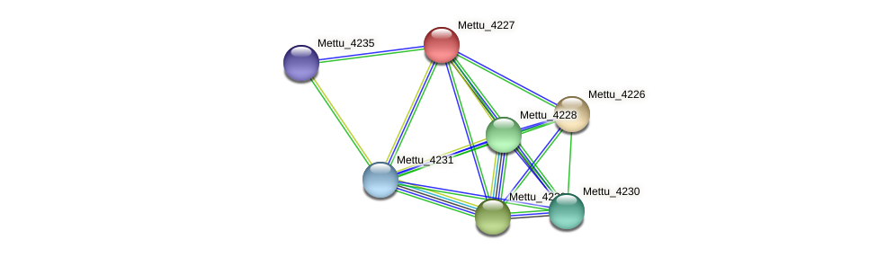 Mettu_4227 protein (Methylobacter tundripaludum) - STRING interaction network