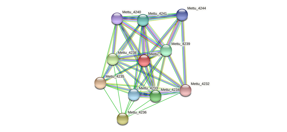 Mettu_4237 protein (Methylobacter tundripaludum) - STRING interaction network