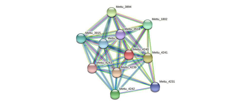 Mettu_4240 protein (Methylobacter tundripaludum) - STRING interaction network