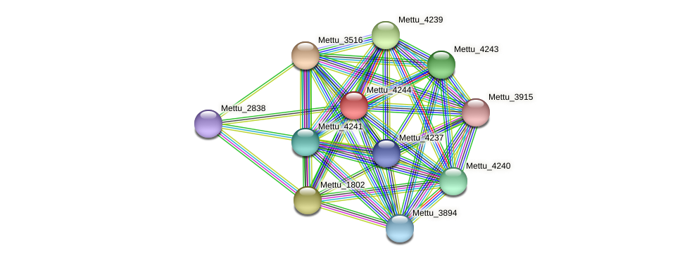 Mettu_4244 protein (Methylobacter tundripaludum) - STRING interaction network