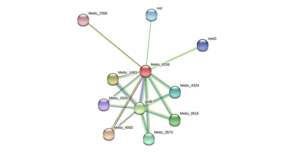 Mettu_4259 protein (Methylobacter tundripaludum) - STRING interaction network