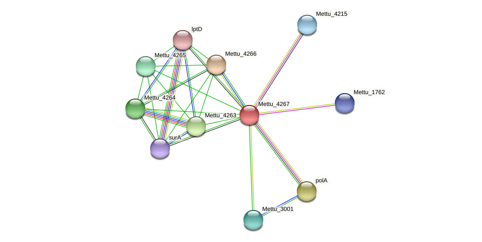 Mettu_4267 protein (Methylobacter tundripaludum) - STRING interaction network