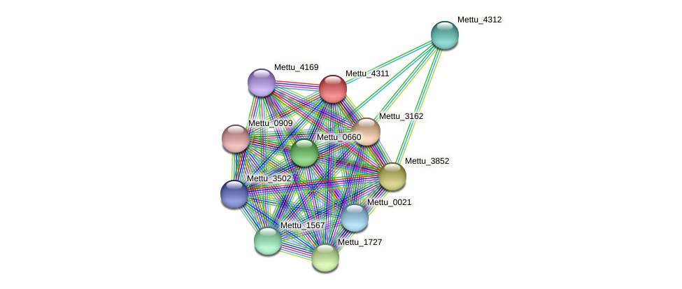 Mettu_4311 protein (Methylobacter tundripaludum) - STRING interaction network