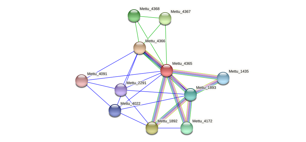 Mettu_4365 protein (Methylobacter tundripaludum) - STRING interaction network