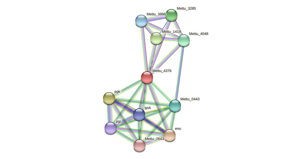 Mettu_4376 protein (Methylobacter tundripaludum) - STRING interaction network