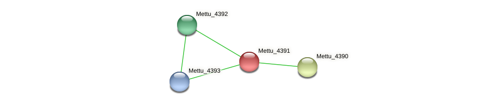 Mettu_4391 protein (Methylobacter tundripaludum) - STRING interaction network