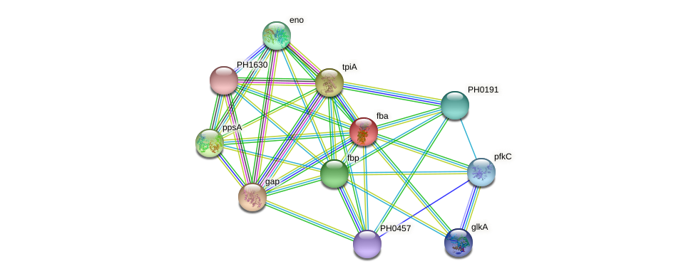 fba protein (Pyrococcus horikoshii) - STRING interaction network