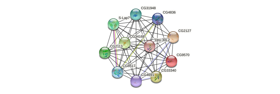 CG9570 protein (fruit fly) - STRING interaction network
