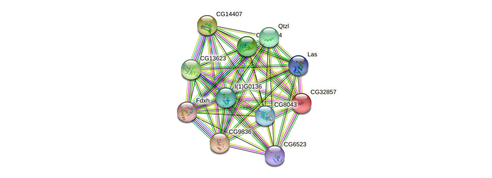 CG32857 protein (fruit fly) - STRING interaction network