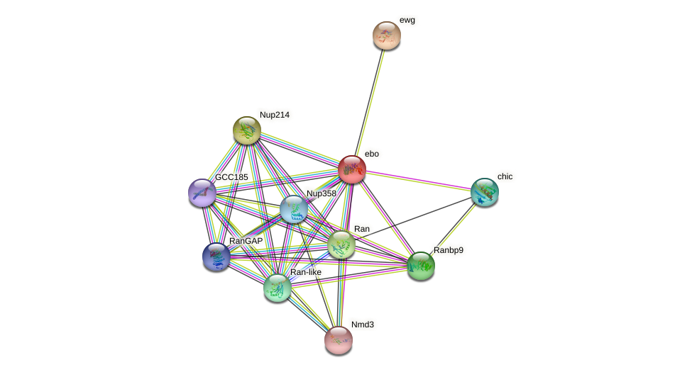 Exp6 protein (fruit fly) - STRING interaction network