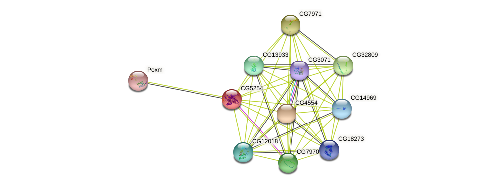CG5254 protein (fruit fly) - STRING interaction network