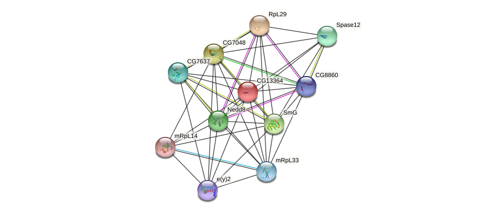 CG13364 protein (fruit fly) - STRING interaction network