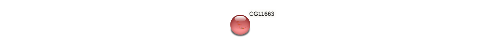 CG11663 protein (fruit fly) - STRING interaction network