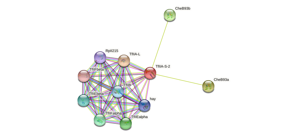 TfIIA-S-2 protein (fruit fly) - STRING interaction network