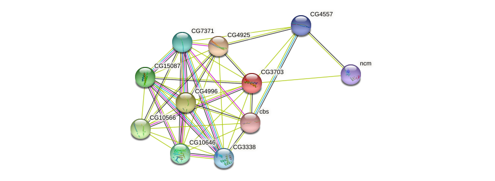 CG3703 protein (fruit fly) - STRING interaction network