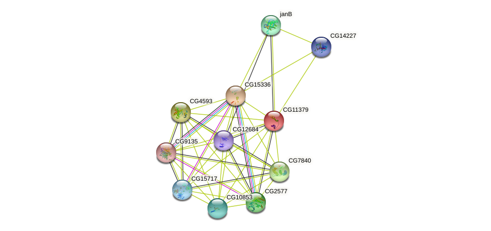CG11379 protein (fruit fly) - STRING interaction network
