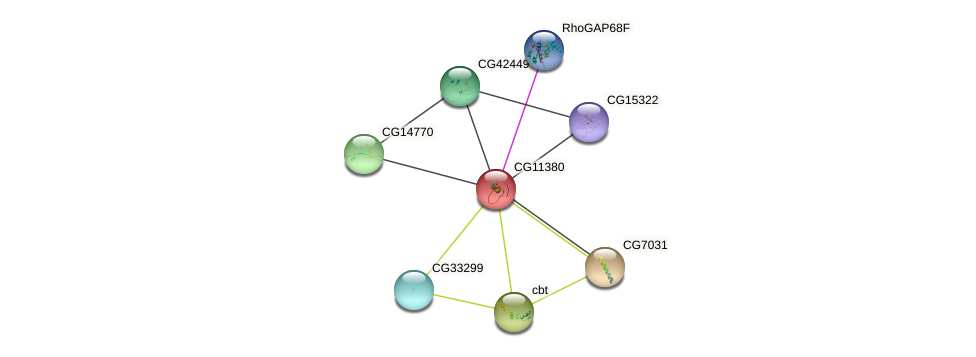 CG11380 protein (fruit fly) - STRING interaction network