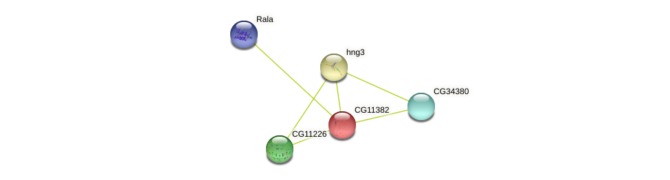 CG11382 protein (fruit fly) - STRING interaction network