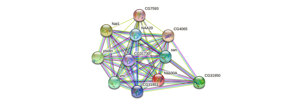 CG11412 protein (fruit fly) - STRING interaction network