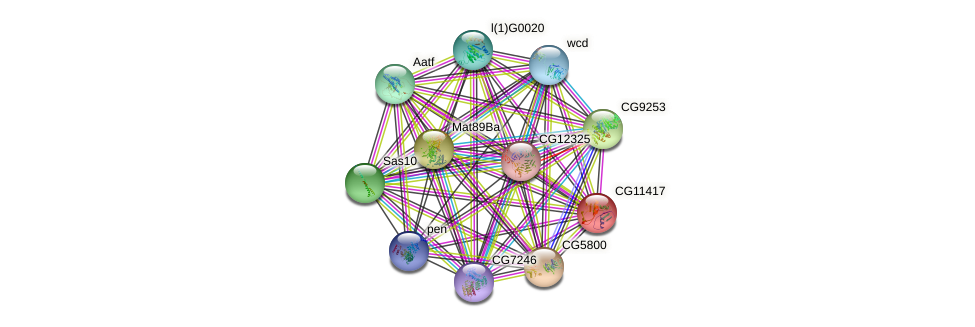 CG11417 protein (fruit fly) - STRING interaction network
