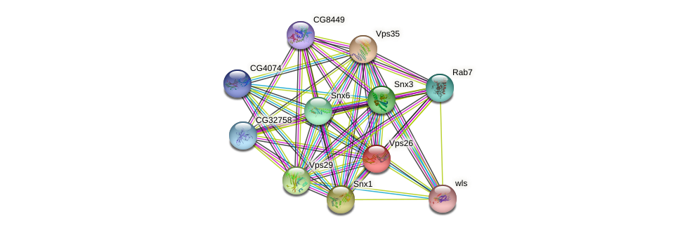 Vps26 protein (fruit fly) - STRING interaction network