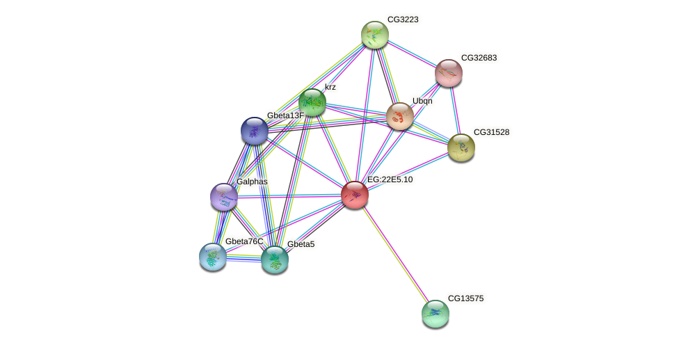 CG4313 protein (fruit fly) - STRING interaction network