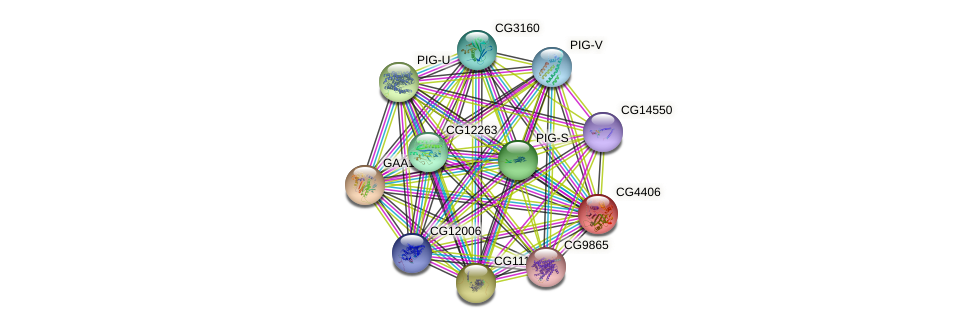 CG4406 protein (fruit fly) - STRING interaction network