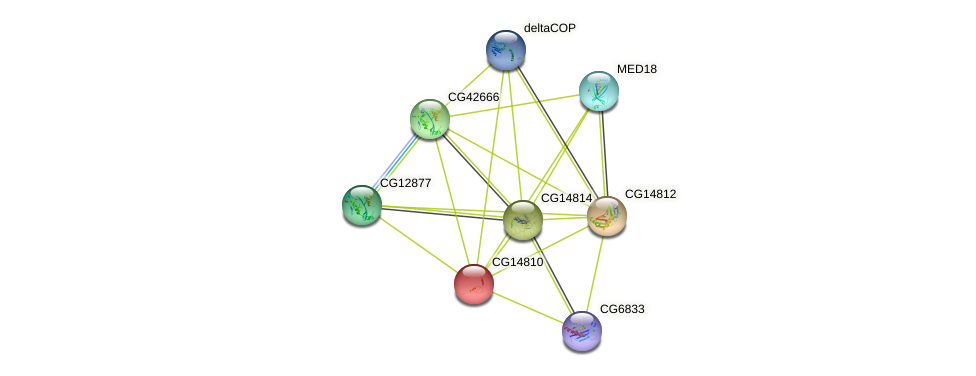 CG14810 protein (fruit fly) - STRING interaction network