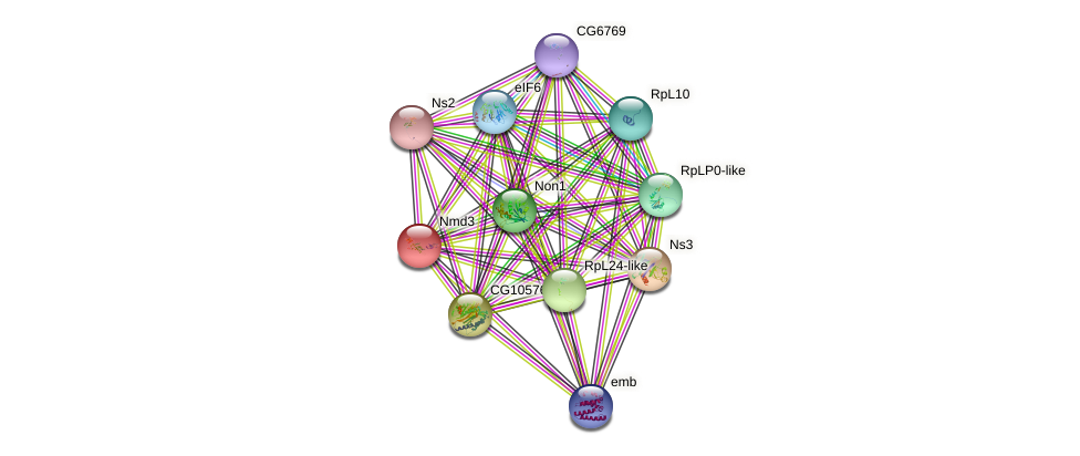 Nmd3 protein (fruit fly) - STRING interaction network